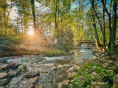 Sunlight Peeks at Gentry Creek