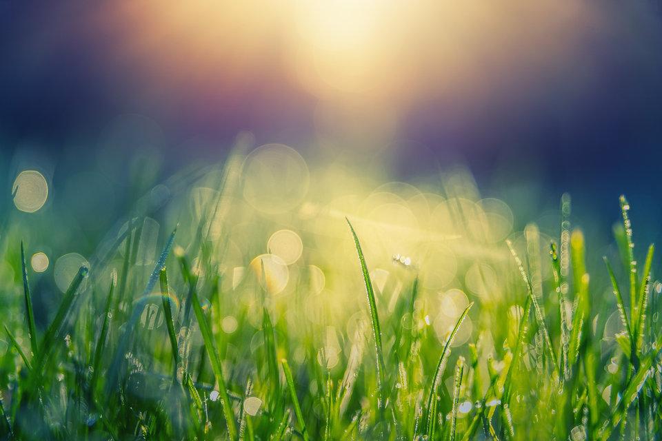 meadow-4411151.jpg