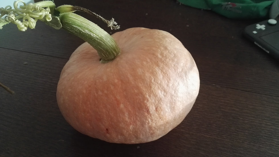 "Courge Maxima ""Salmon Gold"" - graines"
