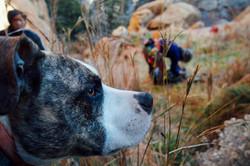 Quartz the crag pup