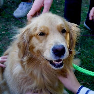 volunteer-dog-kenan-kitchen-LRu2JPt1yD0-
