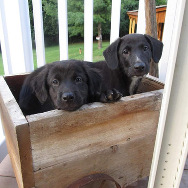 Zoes-House-Rescue-2-Black-puppies_edited