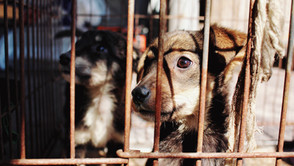The hard realities of puppy mills