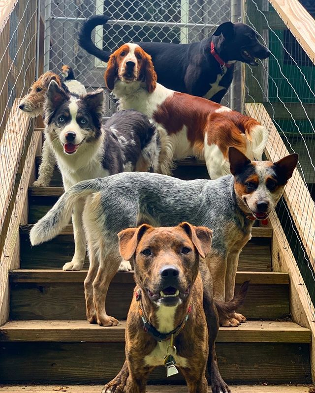 Lots of good boys😍 . .