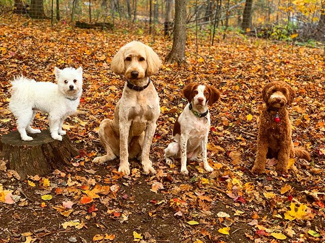 Blending in with the big dogs. . .