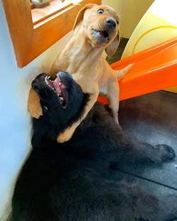⚠️WARNING: CUTENESS OVERLOAD! #puppylove
