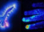 Biophoton of Light.png