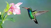 Hummingbird Life.jpg