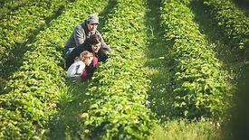 Vierulan tila sijaitsee Mäntyharjussa. Vierulan tila tunnetaan makeista mansikoista ja vadelmista sekä pelloilla kasvavista porkkanoista, kaalista, lantusta, punajuuresta ja perunoista, joiden sadosta riittää lähiruokaa myyntiin talveksi.