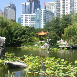 Garden in Sydney