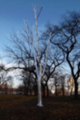 Noyes_Tree_1.jpg