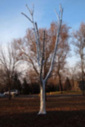 Noyes_Tree_2.jpg