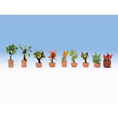 Noch Zierpflanzen in Blumenkübeln