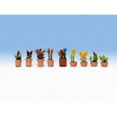 Noch Zierpflanzen in Blumentöpfen