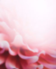 abstract-pink-flower.jpg
