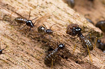 bigstock-Colony-Of-Termites.jpg