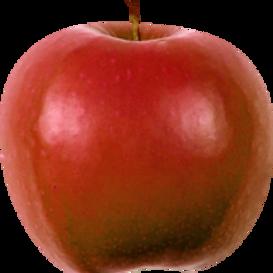 Apfelstücke BIO