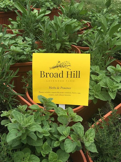 Herbs de Provence Patio Planter