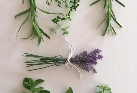 Herbs de Provence.jpg