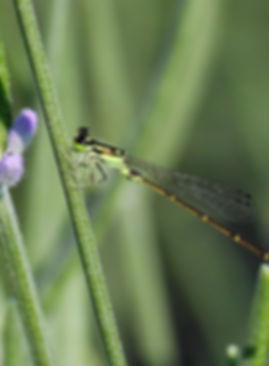fly flower.jpg