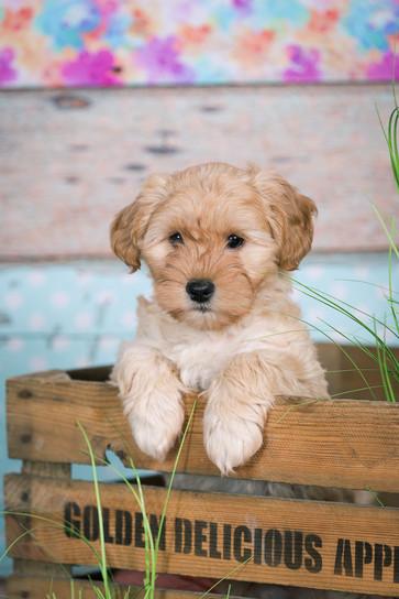 20180123_Hundshooting_Buddy+Polly_Eichen_0230.jpg