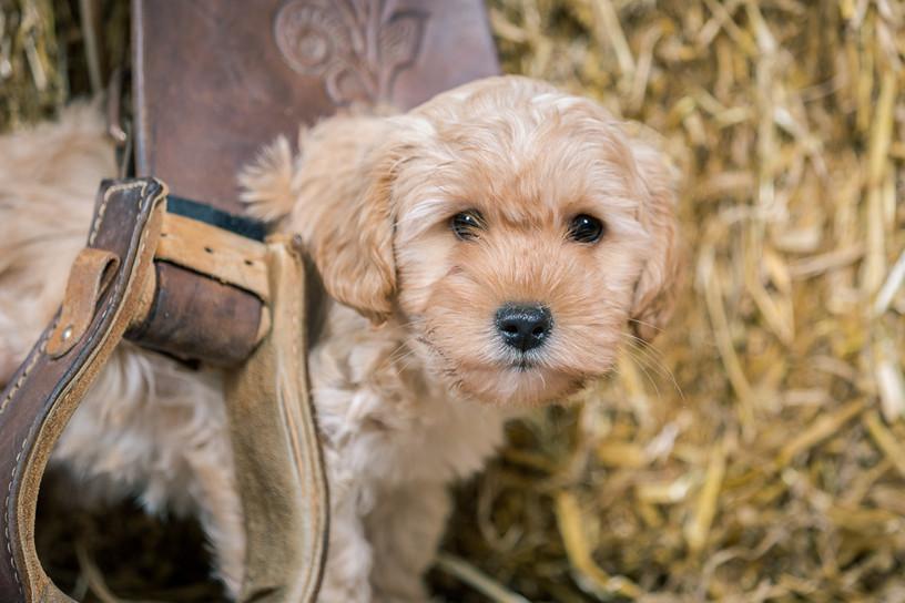 20180123_Hundshooting_Buddy+Polly_Eichen_0301.jpg