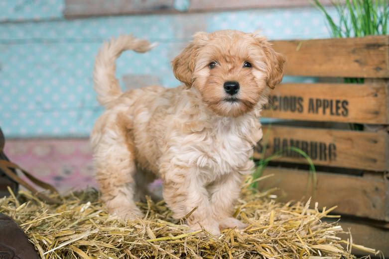 20180123_Hundshooting_Buddy+Polly_Eichen_0206.jpg