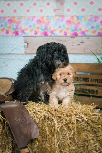 20180123_Hundshooting_Buddy+Polly_Eichen_0208.jpg