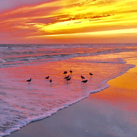 OH_beach_sunset_birds-min.jpg