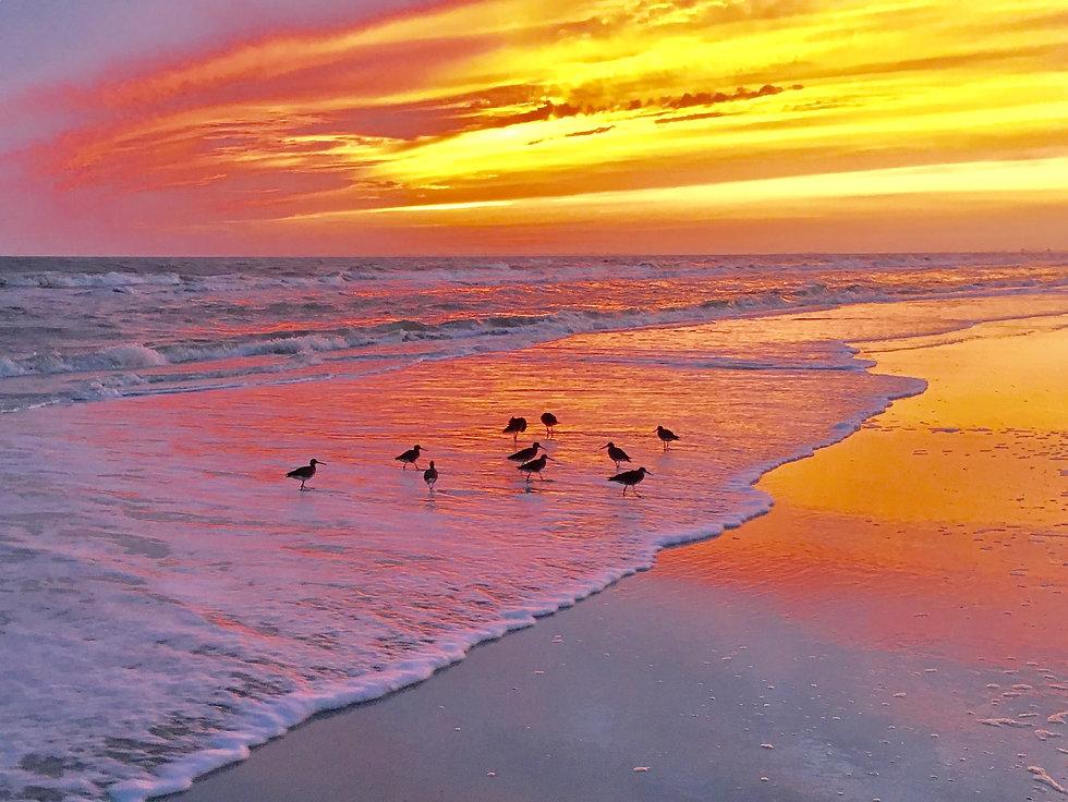 OH_beach_sunset_birds-min.jpg