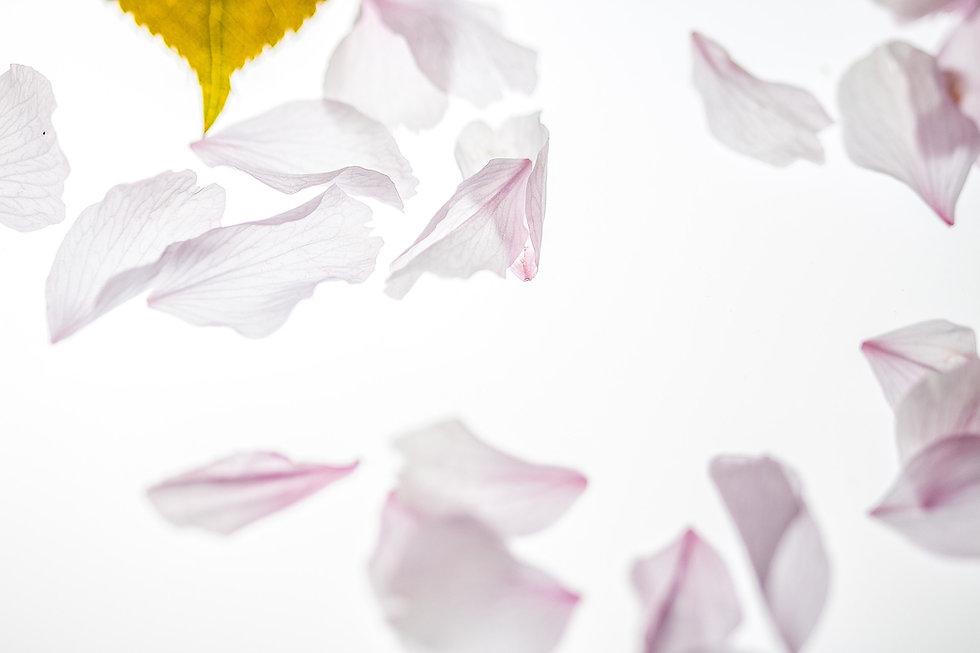 petals-2232267_1920.jpg