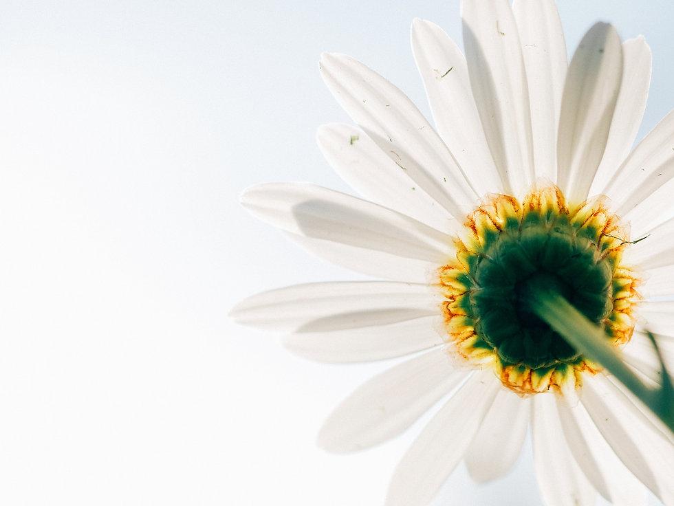 daisy-801813_1920.jpg