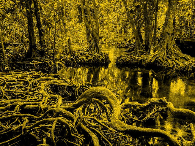 mangrove_edited.jpg