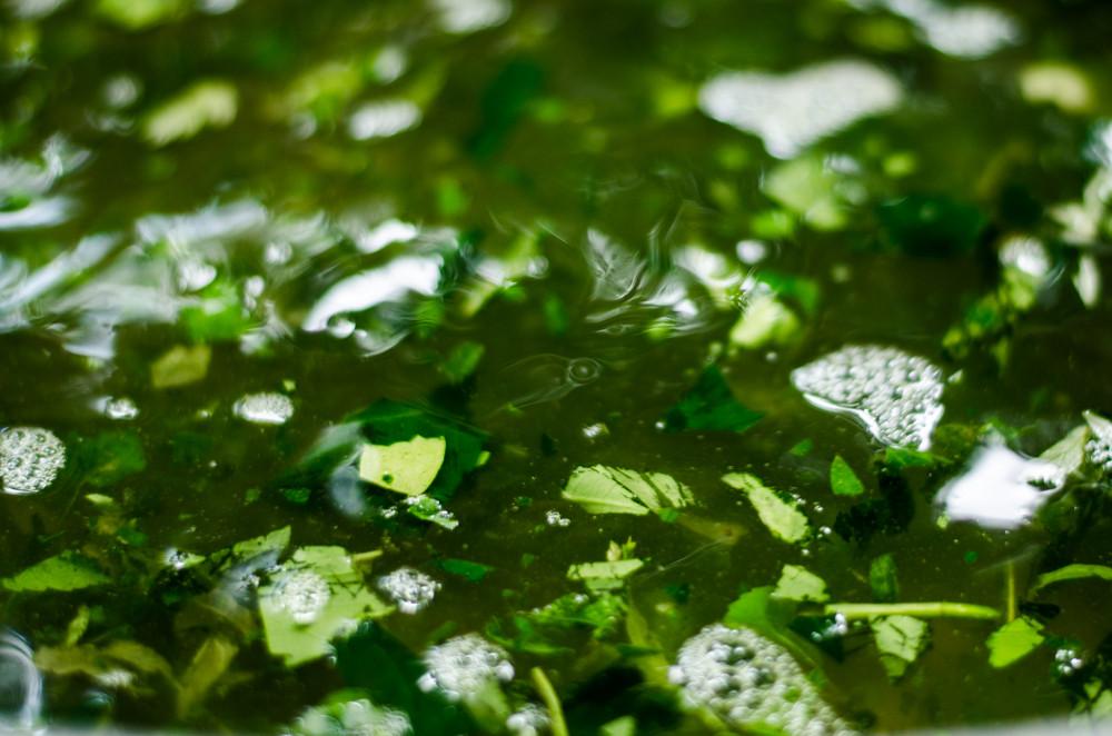 o verde que escorre pungente
