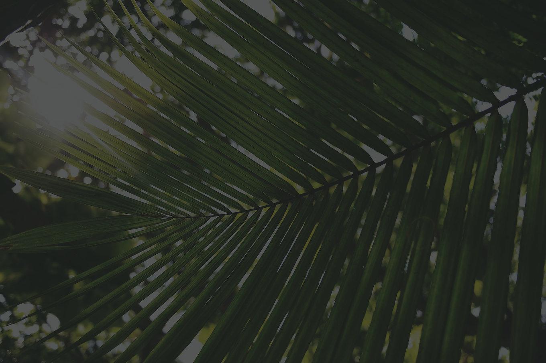 Coconut%20palm._edited.jpg