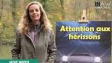 181110 Heike RAW Animal Media.jpg