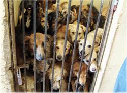 """Stop à la reproduction des animaux aussi longue les """"refuges"""" sont remplis - mesopinions.com"""