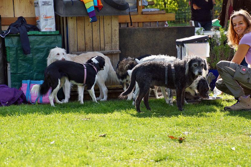 Sissach 5 Hunde und Heike.jpg