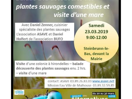 23.03.2019 Balade nature gourmande avec Daniel Zenner