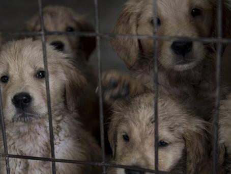 Industrielle Hunde- und Katzenvermehrung
