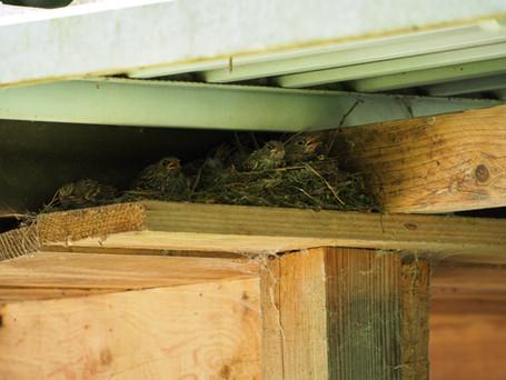 La place idéal pour un nid d'oiseau