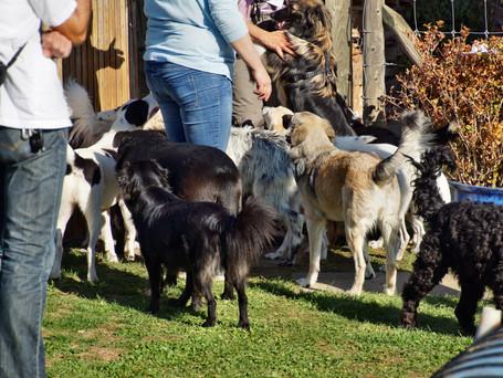 Beim Hundetreffen in Sissach