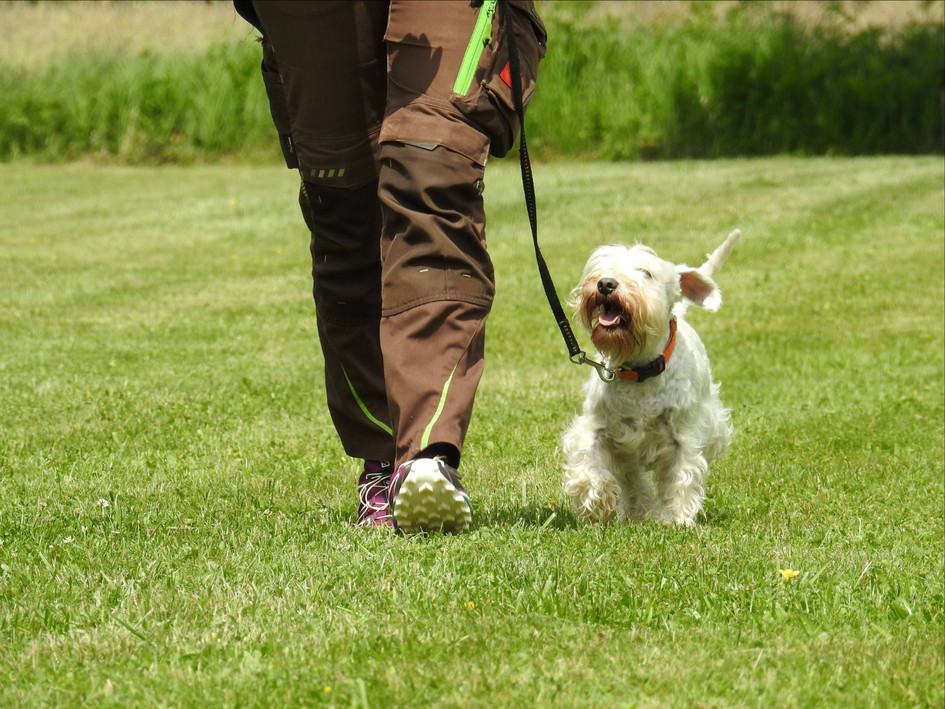 Susi avec Daisy, adoptée en 2016