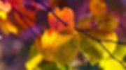 autumn-leaves-3813741_1920.jpg