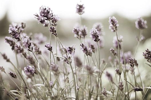 plant vibrational medicine, plant vibration healing