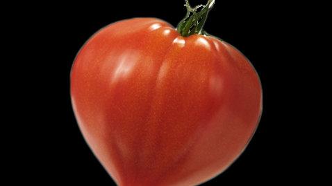Tomate coeur de boeuf le kilo