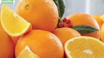 oranges le kilo