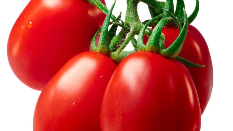 tomates roma le kg