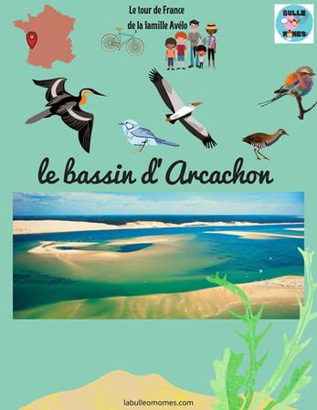 A la découverte de la faune du bassin d'Arcachon
