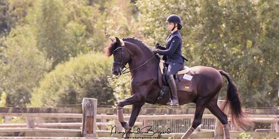 Working Equitation Trail & Dressur Kurs mit Hannah Paloma